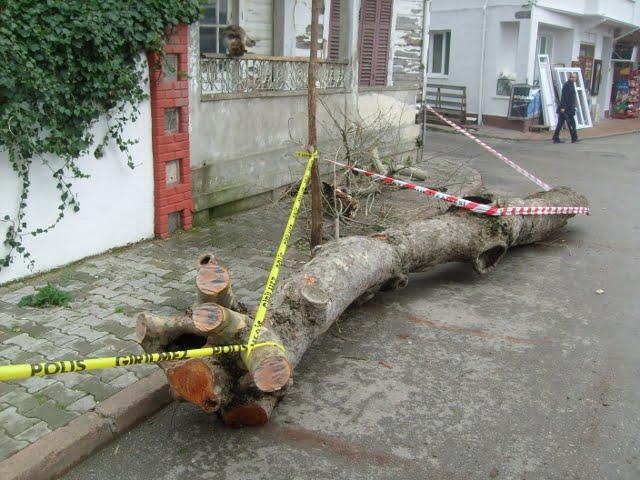 Çınar ağacı kundaklandı mı?