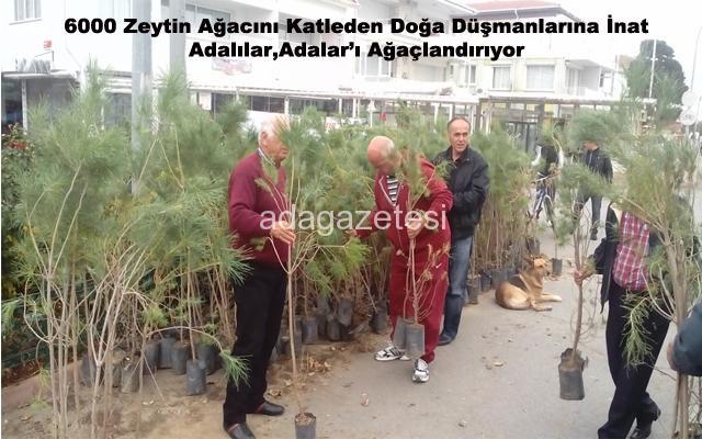 Kınalıada'da ağaç bayramı