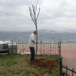 Adaspor Derneği ağaçlandırma çalışmaları