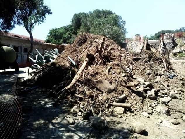 Bakan Eroğlu: Yassıada'da 3-5 ağaç kesildi