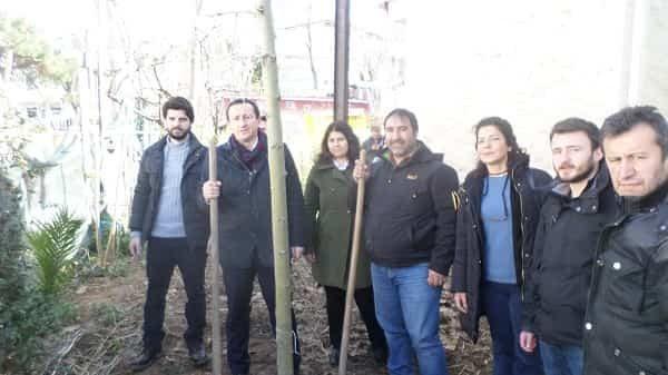 Büyükada Cemevi'ne çınar ağacı