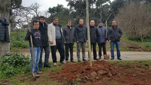 Büyükada Fırat Yılmaz Çakıroğlu Şehit ağacı