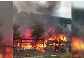 Büyükada'daki yangında 9 at telef oldu