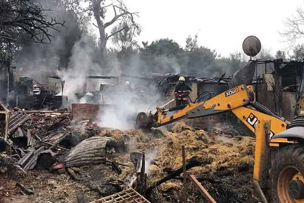 Büyükada'daki yangında yaralanan atlar tedavi altına alındı