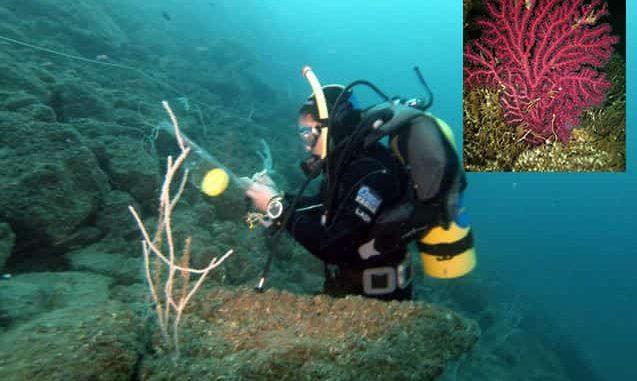 """Doç.Dr. Nur Eda Topçu Eryalçın: """"Marmara Adası'ndaki mercanları da öldürdük"""""""