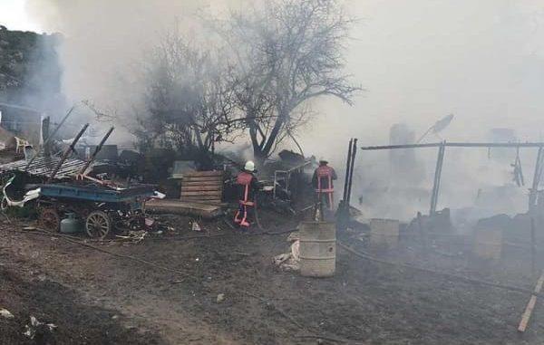 Büyükada'da 9 atın öldüğü yangına 1 yıla kadar hapis istemi