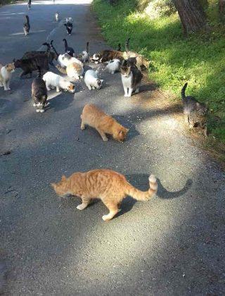 adalar'da-hayvanseverler-ac-kalan-sokak-hayvanlarini-besledi