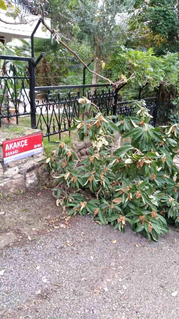 Büyükada'da yollar ağaç dalları ve yapraklarla dolu!