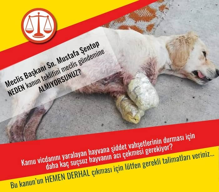 Hayvan Hakları Yasama İzleme Delegasyonu'ndan basın açıklaması