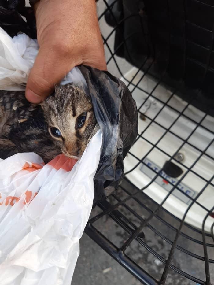 Adalar'da kedi ölümleri arttı!