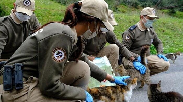 Adalar'da çevre, doğa ve hayvanları koruma polisleri görev başında