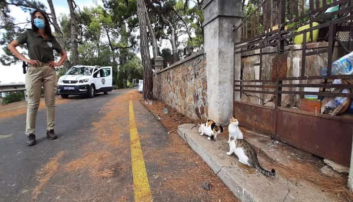 Adalar'da ormanlarda denetimler sürürken sokak hayvanları da ihmal edilmiyor