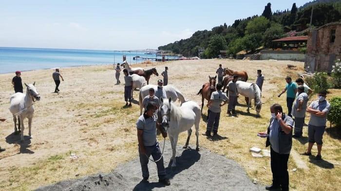Adalar'daki atları sahiplenen kurum ve kişilerin listesi açıklandı