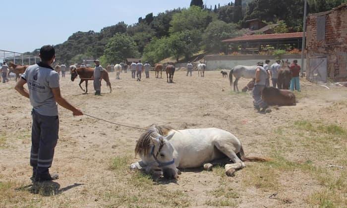 Adaların kayıp atları MHP'de istifa getirdi