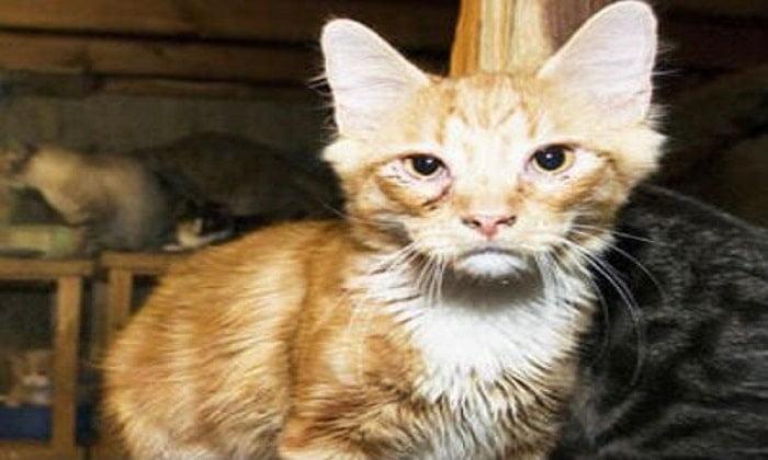 Kedi İstif Evleri Büyükada'da ölüm saçıyor